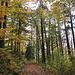 ... in den Herbstwald hinein ...