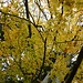 feines Blätterdach