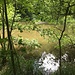 Sumpfwald mit Drittweier.