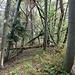 Viele umgestürzte Bäume im Abstieg zum Spaleneggli.