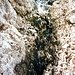 Steile Rinnen befördern das Schmelzwasser zu Tal.