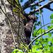 Ein Eichhörnchen rettet sich auf die Bäume.