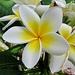 Wunderschöne Blüten im Tropenhaus.