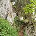 Kurz vor der Kraxlstelle. Zwischen dem hellen und dem dunklen Fels geht es links hinauf.
