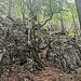 ... und Wald und Fels. Alles sehr wild und urtümlich.