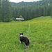 Almwiese vor der Oberen Rottauer Alm.