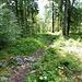 Über Stock und Stein gehts durch den dichten Bergwald