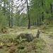herbstlichen Wald