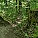 Downhill von der Kyburg zur Töss hinunter