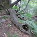 in den Wald hinein
