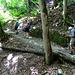 weiter durch den schattigen Wald