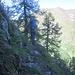 Tratto attrezzato sulla cresta spartiaqcue Loana / Valle di Finero (lato Loana).