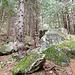 Val di Mello,<br />Mächtige Felsblöcke säumen die Wege
