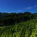 Wald - soweit das Auge reicht :-) Ein wunderschönes Gebiet.