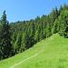 Weiter geht es nun - nach dem breiten Forstweg - über ein Pfad hinauf zum Teufelstättkopf.