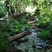 Das Wasser ist auf diesen Baumstämmen zu queren