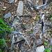 ein Eichelhäher hat hier sein Leben gelassen, gut zu erkennen an den blauen Federn.