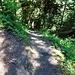 die letzten Meter bis zum Römerweg