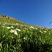 Blumenwiese im Aufstieg zum Malakoff