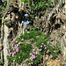 Giardinetti alpini.