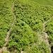 Weiter geht's durch Heidelbeeren. Hier gibt es unzählige Trittspuren in alle möglichen Richtungen.