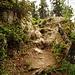 Aufstiegsweg durch den Aletschwald zur Riederfurka