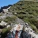 Ich hatte mir nicht gemerkt, dass der Abstieg auf der Sihltaler Seite auf halber Höhe zwischen Chläbdächer/Westgipfel und Twäriberglücke beginnt. Also musste ich wieder hinauf.
