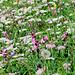 Wunderbare Blumenwiesen, überall wo man hin sieht.