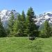 Alpe Meili