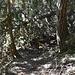 Waldweg oberhalb von Bärg ist effektiv blockiert von einen gefallenen Baum