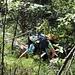 Dschungel-Camp