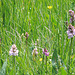 Weitere Orchideen
