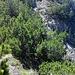 Will man die Tour in die andere Richtung angehen: hier geht es durch die unscheinbare Rinne oberhalb der Latsche am unteren Bildrand nach rechts