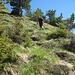 durch steiles Grasgelände hinauf auf den Grat
