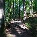 noch ein kurzer Aufstieg durch den Wald, dann...