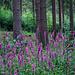 Im Rothe Kreuz Wald