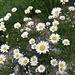 Ein Blumenstrauss für euch