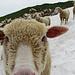 Hallo du Wanderer: Was machst DU auf meinem Schneefeld?!? :-D