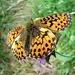 ..Bellissimo esemplare di farfalla.