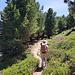 Wunderschöner Wanderweg durch Alpenrosen und lichten Wald