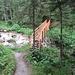 die Brücke wurde neu gebaut