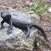 Salamander in Pose