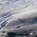 Die Japaner werfen lange Schatten auf der abendlichen Gletscherzunge