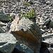 Bonsai on the boulder.