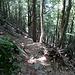 Bei der Costa del Laton, nun im Wald.