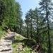 Über den gut angelegten Hüttenweg geht es zunächst durch Wald...