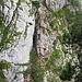 Unterwegs am Franz Scheikl Klettersteig