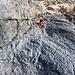 1. IIIer Seillänge nach dem Bergschrund