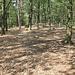Für Mitteleuropa untypischer Waldboden ohne Bodenvegetation