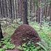 Hier gibt es skandinavientypisch viele große Ameisenhaufen.